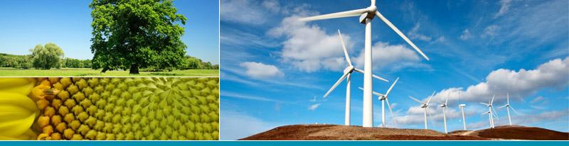 Carbon Solutions Group : Low Carbon for a Sustainable Future