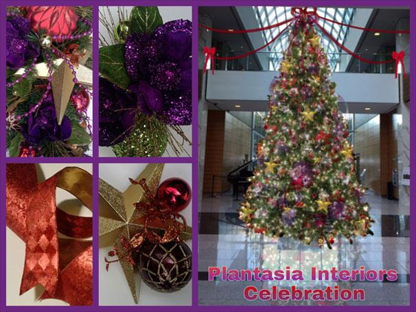 Holiday Plant Displays Wreaths Trees Poinsettia RI MA Plantasia