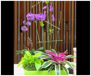 Flowering Plants Color Bowls Office Plantasia RI MA