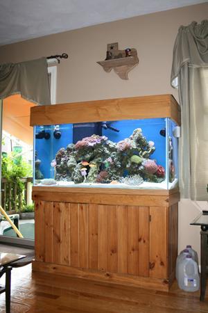 Portfolio - Fish Mike Aquatics