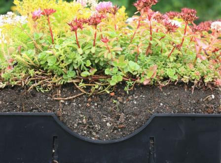 System Overview | LiveRoof Hybrid Green Roofs