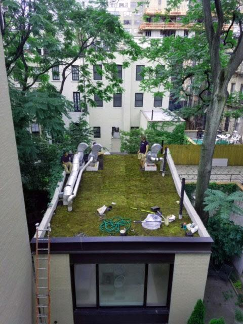 Green Live Moss Roofs