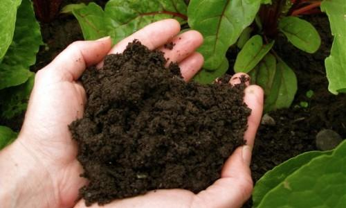 Stratham Hill Stone - Healthy Soils & Nutrient Filled Compost | Madbury, NH | Pick-Up or Delivery
