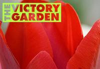 PBS Victory Garden
