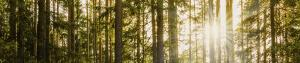 FSC® Chain of Custody | SCS Global Services