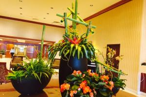 Flowering Orchid Plants Indoor Arrangements RI MA