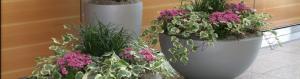 Indoor Office Plants Flower Program Plantasia Interiors RI MA