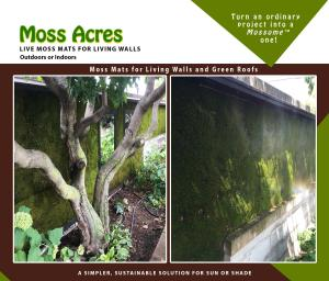 Live Moss Panels for Living Walls, Vertical Gardens and Green Walls.
