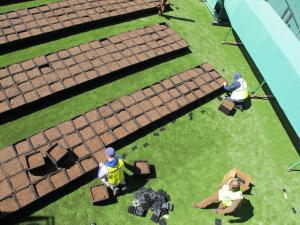 Services — Recover Green Roofs