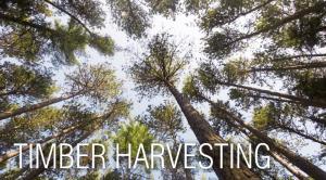 Timber Harvesting - Lashway Lumber | Williamsburg, MA