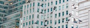 Bird Strike Window Decals | Prevent Birds from Hitting Windows