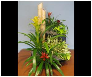 Flowering Plants Color Bowls