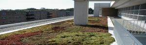 Vegetated Green Roof Systems