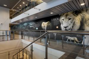 Amplify Wallcoverings & Window Films Signage