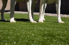 SYNLawn® Pet System   safe artificial grass pet products
